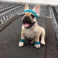 Puppy-PT